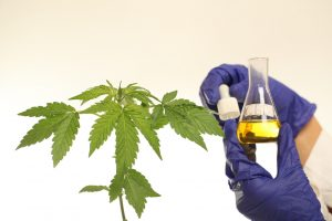 CBD oil for arthritis pain